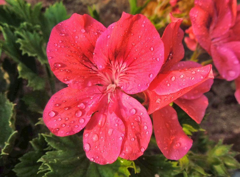 花卉日记-66_图1-5
