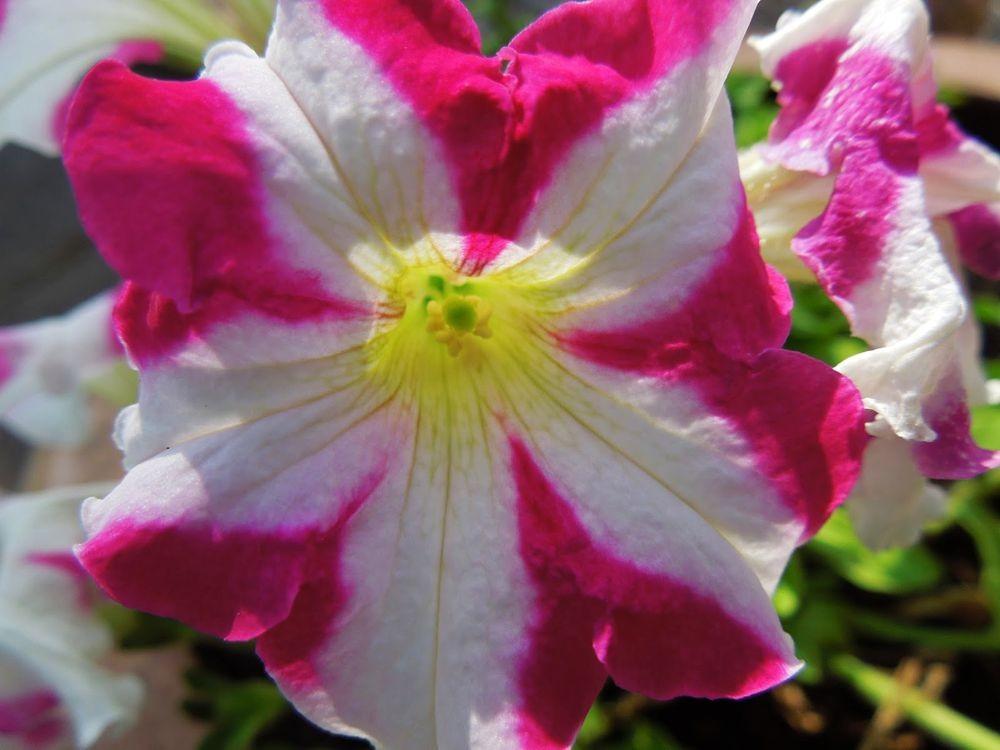 花卉日记-66_图1-6