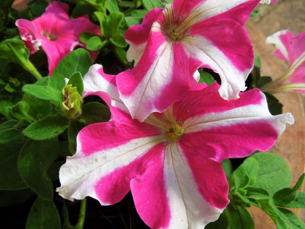 花卉日记-66_图1-8