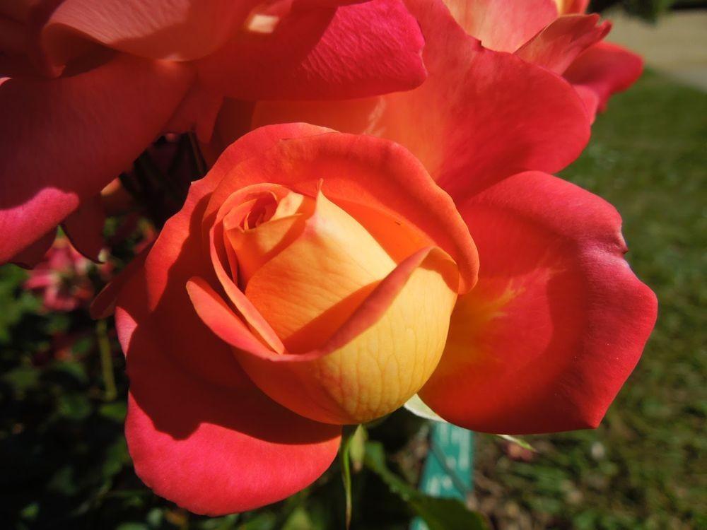 花卉日记-66_图1-9