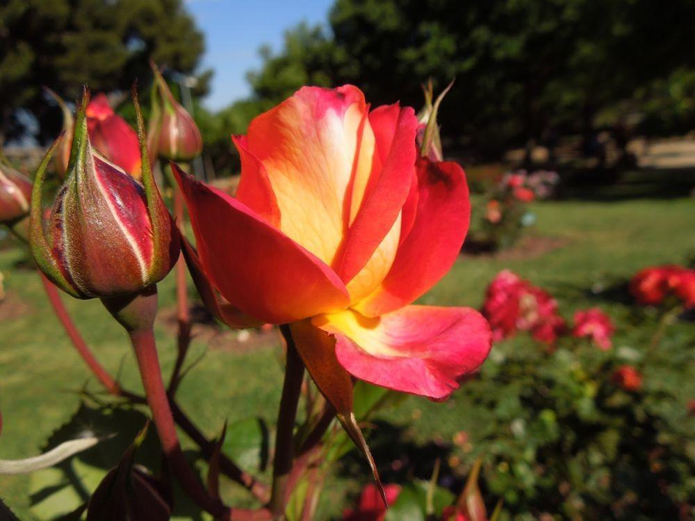 花卉日记-66_图1-10