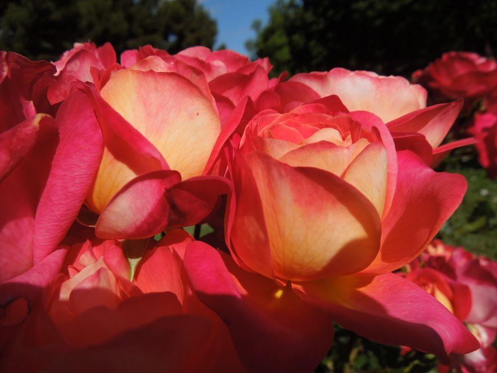 花卉日记-66_图1-11