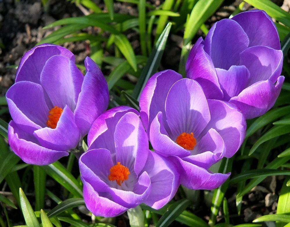 花卉日记-66_图1-12