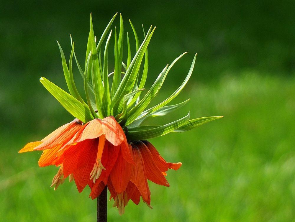 花卉日记-66_图1-15