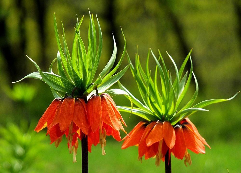 花卉日记-66_图1-16