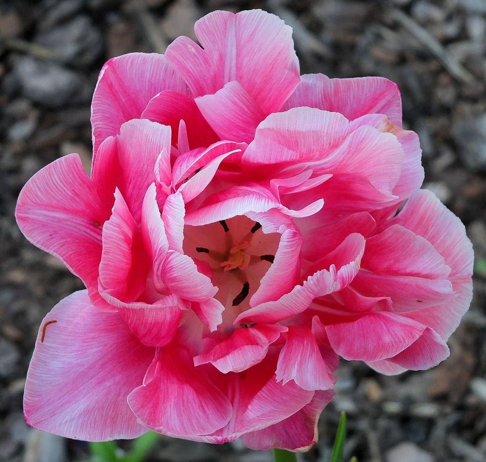 花卉日记-66_图1-17