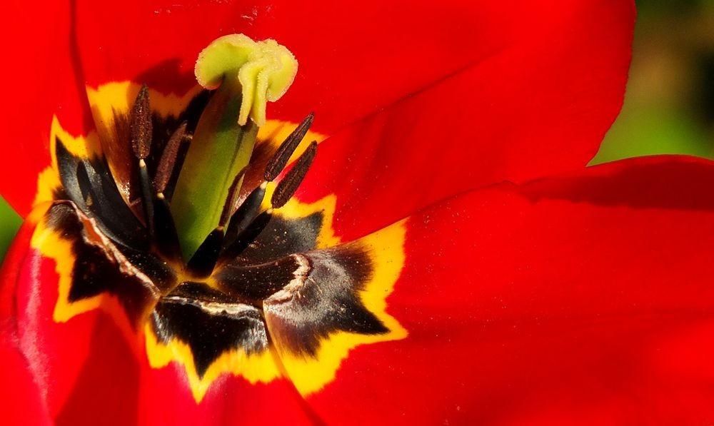 花卉日记-66_图1-21