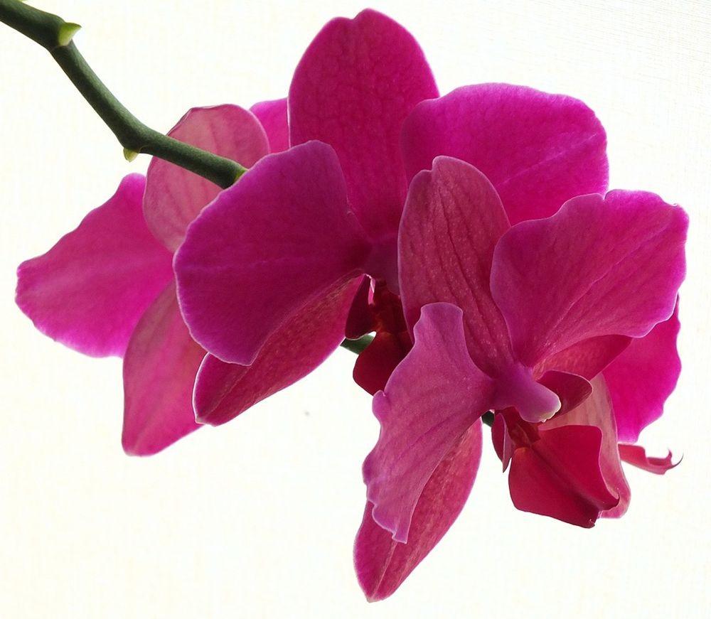花卉日记-66_图1-23