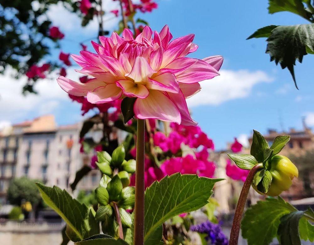 花卉日记-67_图1-1