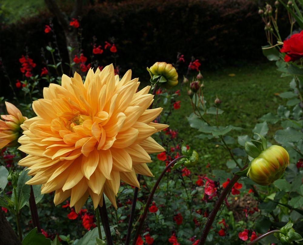 花卉日记-67_图1-2