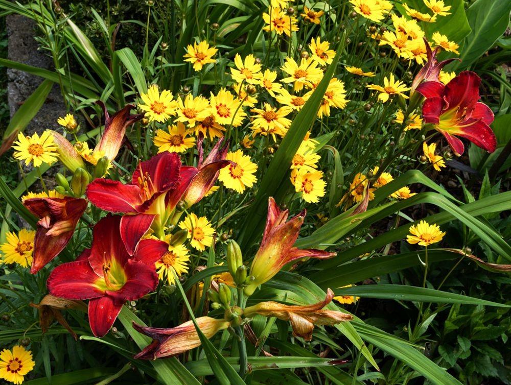 花卉日记-67_图1-3