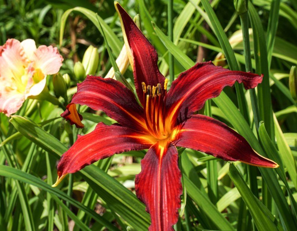花卉日记-67_图1-4