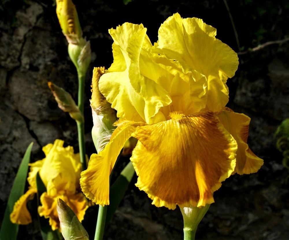 花卉日记-67_图1-6