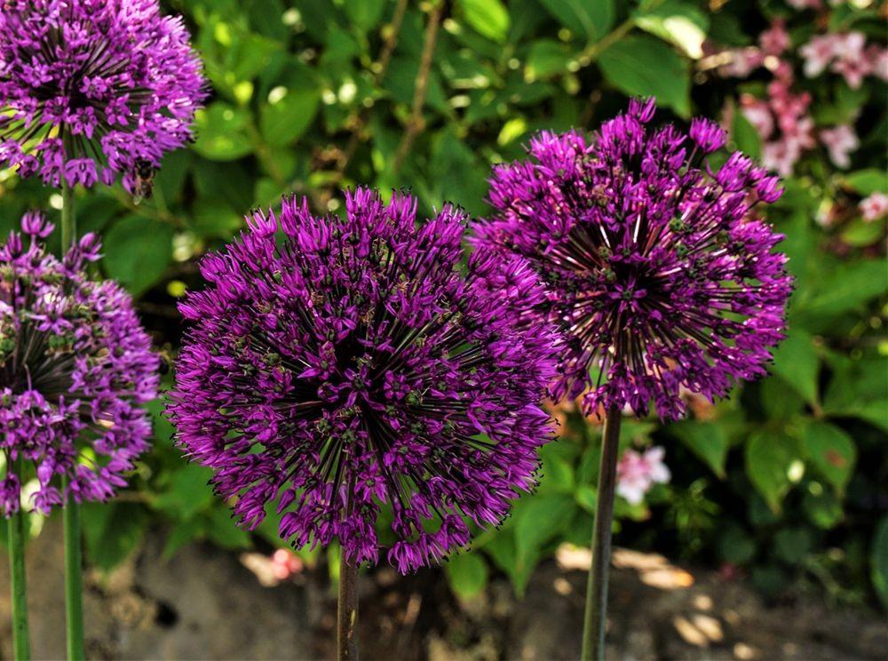 花卉日记-67_图1-7