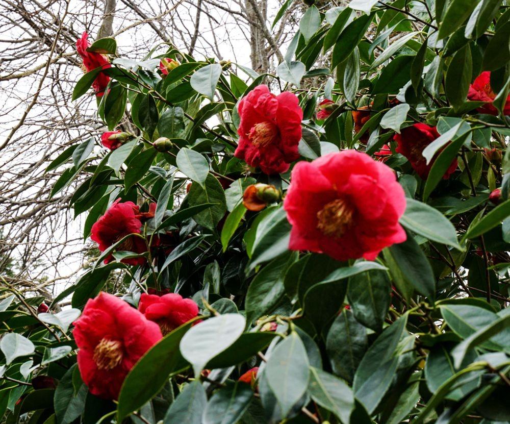 花卉日记-67_图1-10
