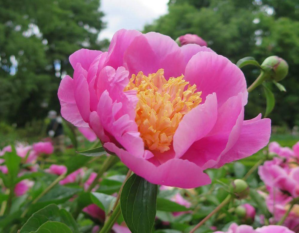 花卉日记-67_图1-12