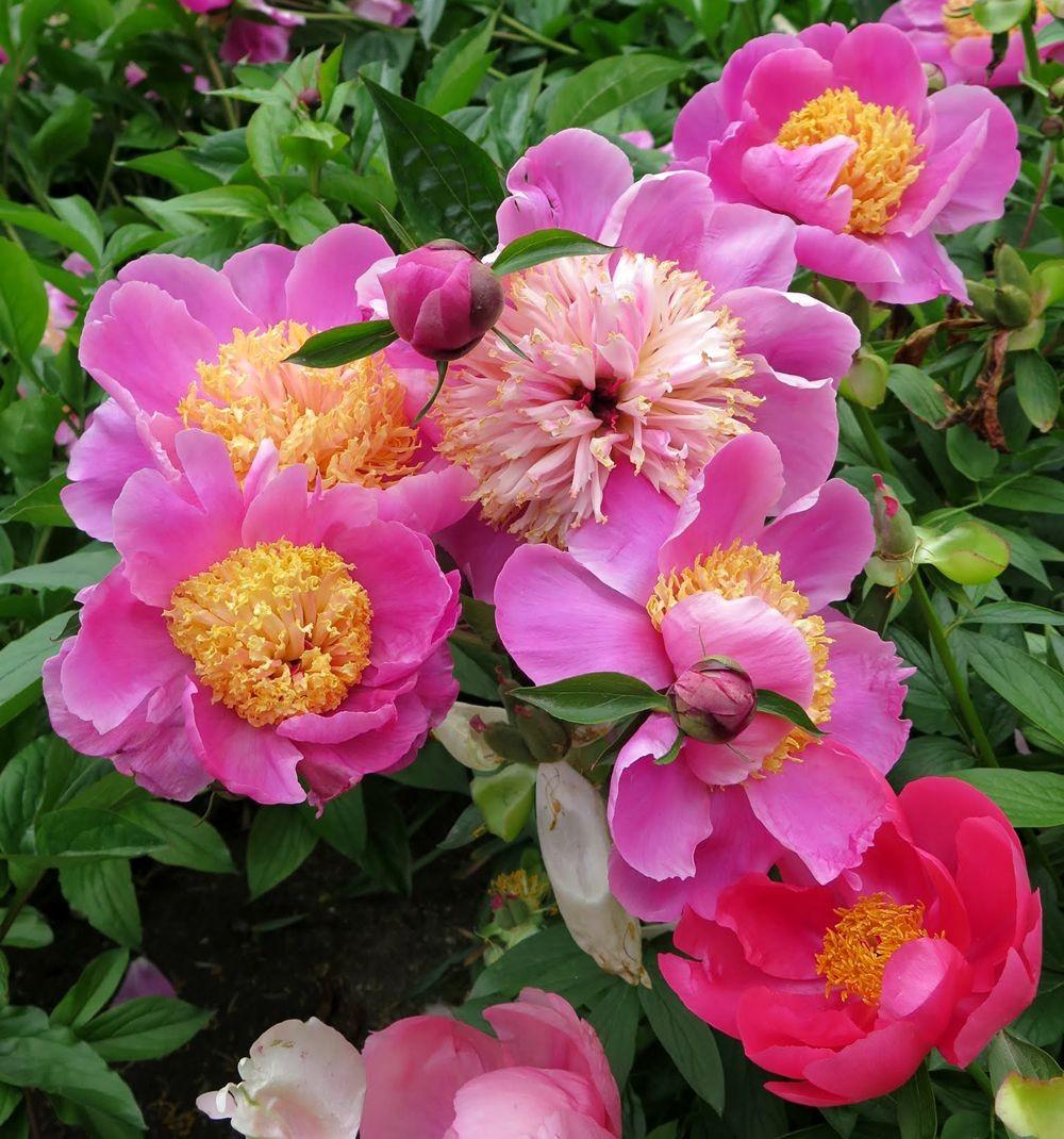 花卉日记-67_图1-13