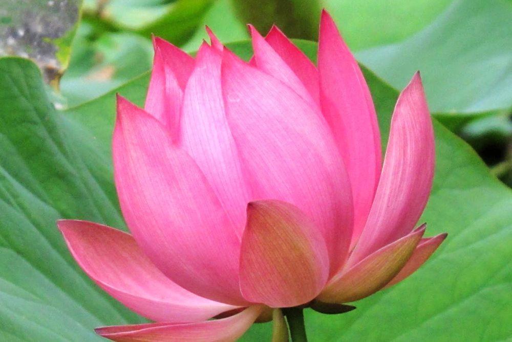 花卉日记-67_图1-15