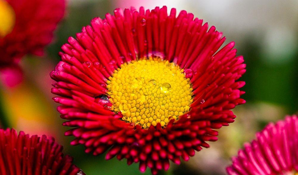 花卉日记-67_图1-16