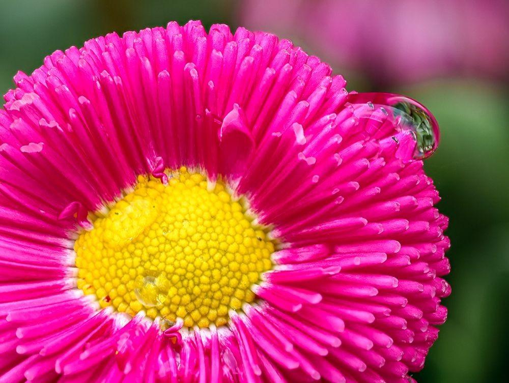 花卉日记-67_图1-17
