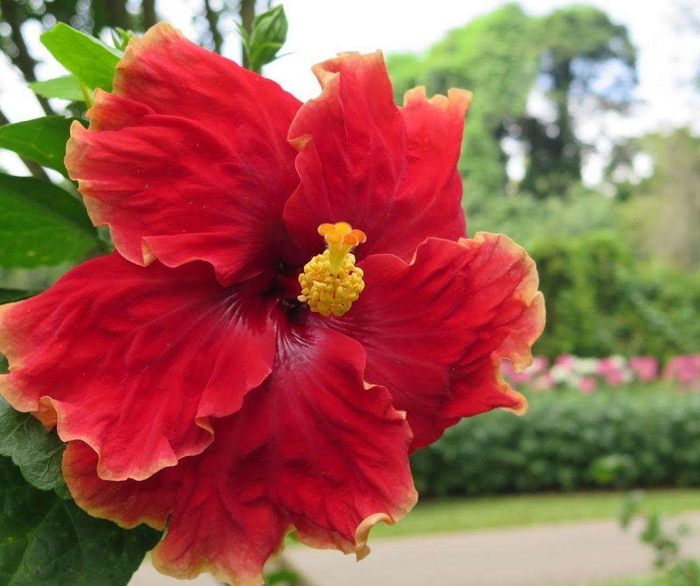花卉日记-67_图1-19