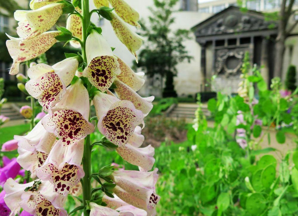 花卉日记-67_图1-21