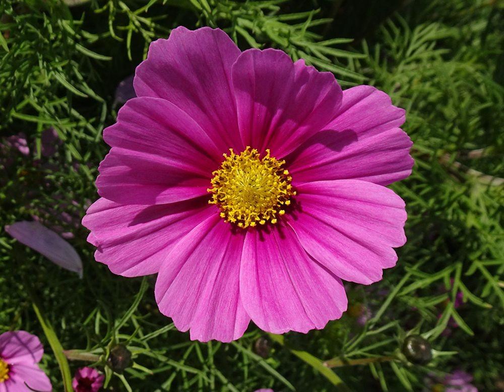 花卉日记-67_图1-23