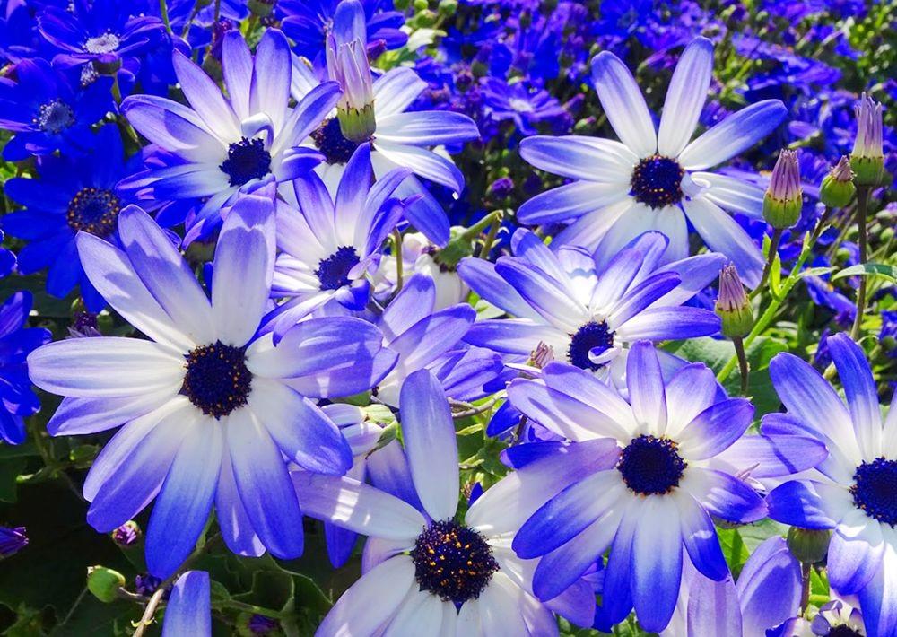 花卉日记-67_图1-24