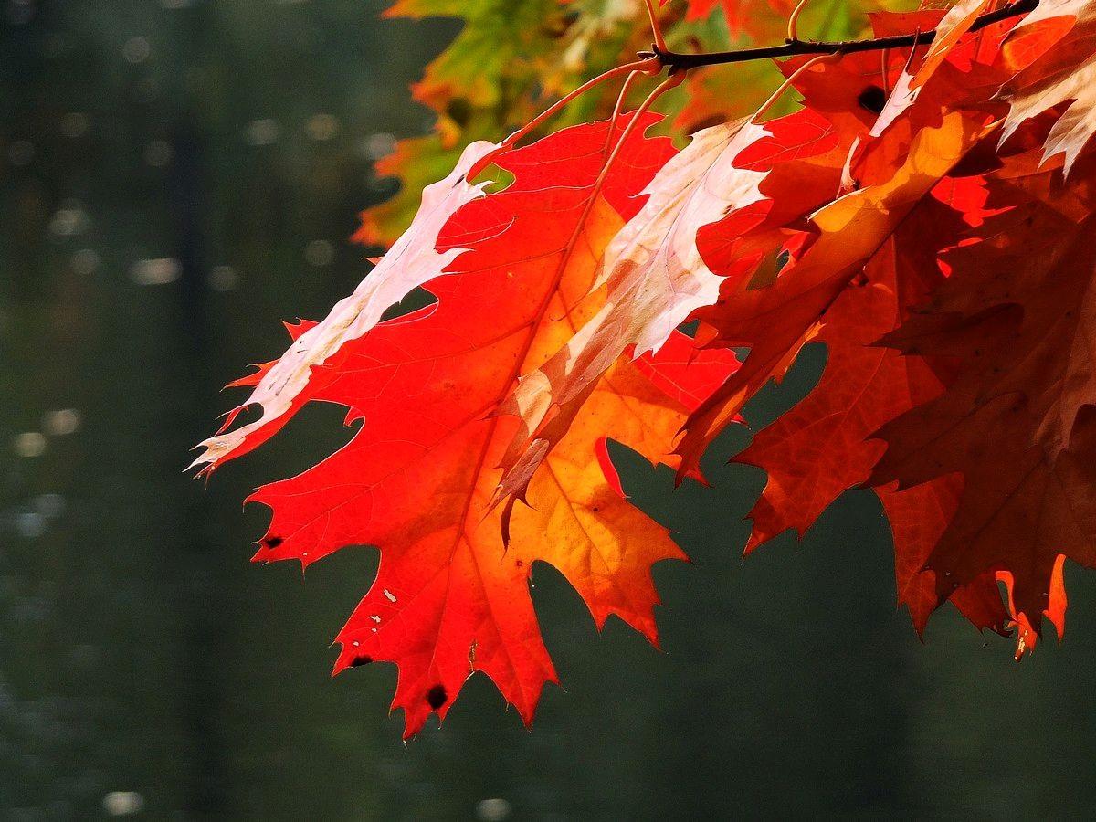 回顾秋天的颜色_图1-1