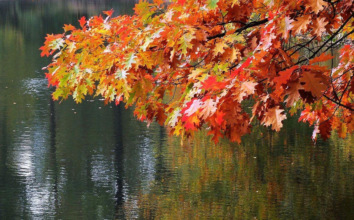 回顾秋天的颜色_图1-2