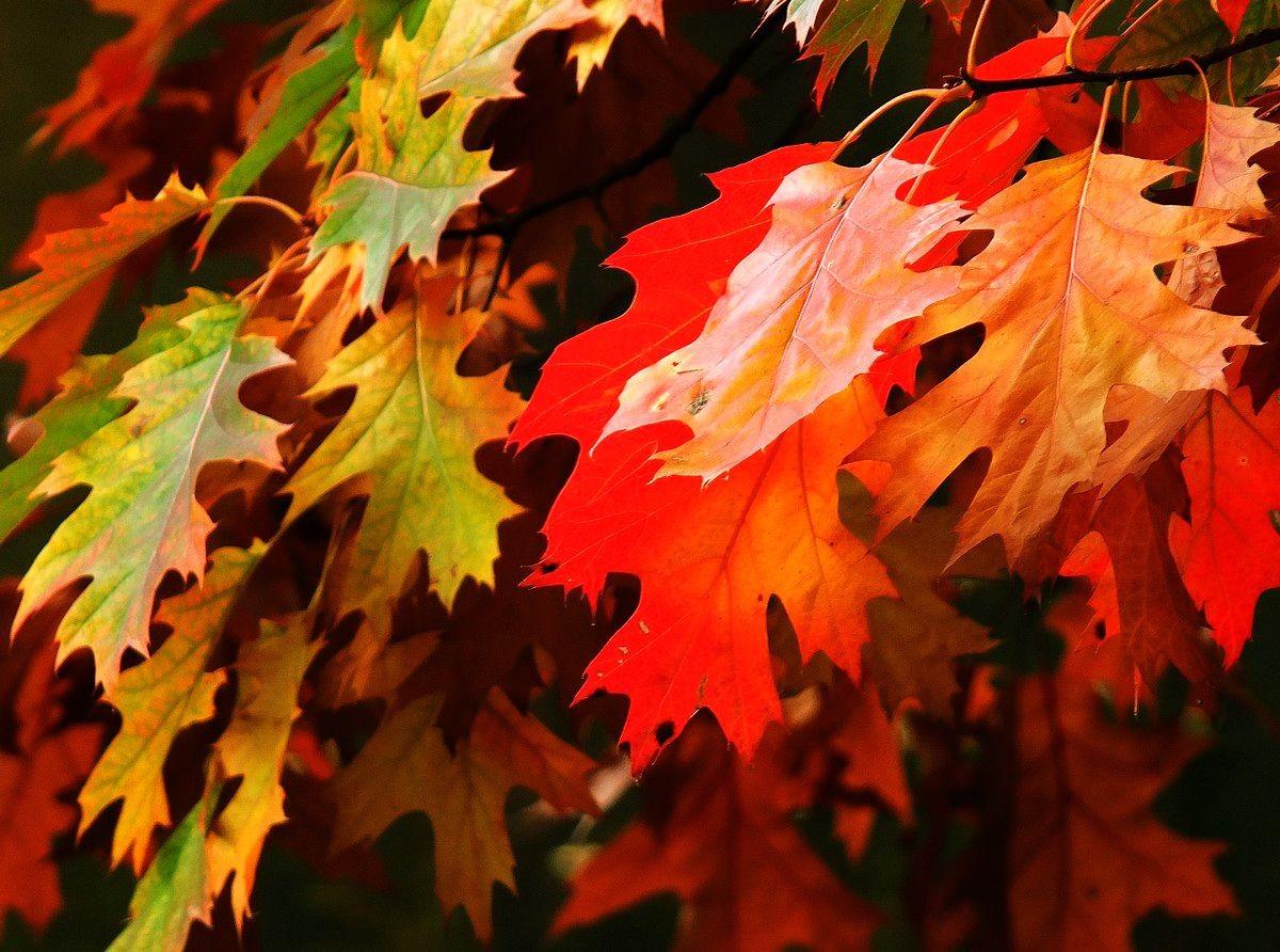 回顾秋天的颜色_图1-3