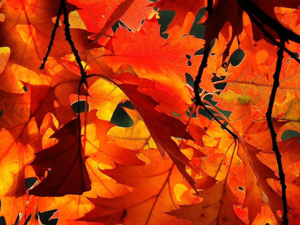 回顾秋天的颜色_图1-4
