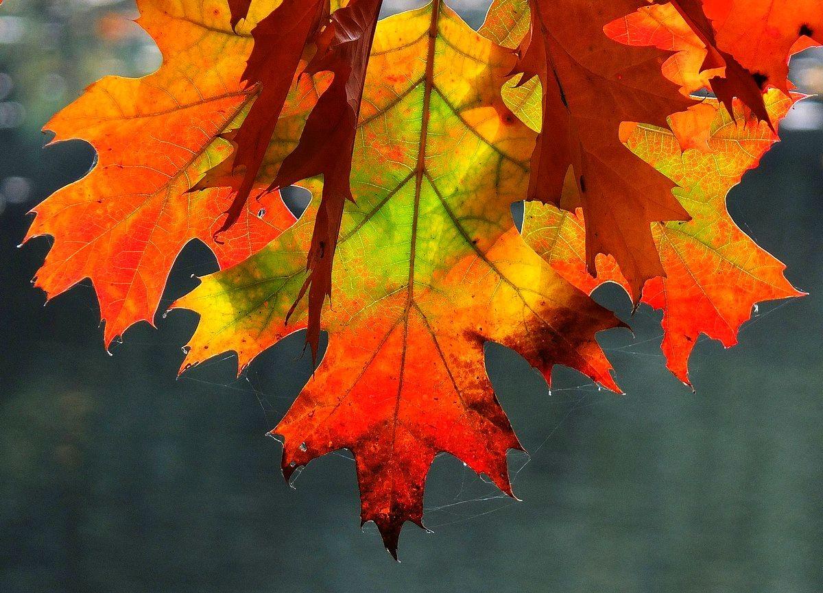 回顾秋天的颜色_图1-5
