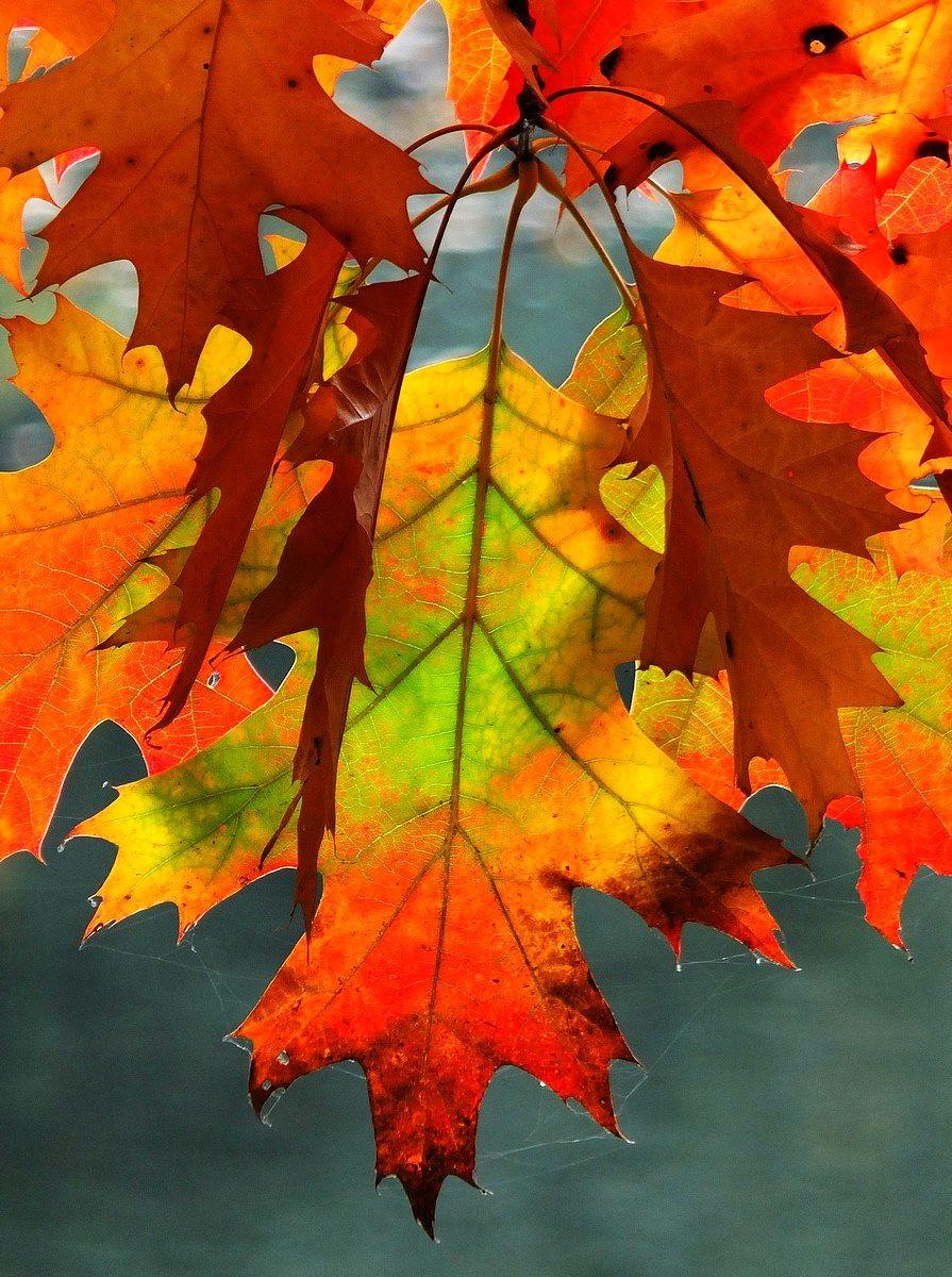 回顾秋天的颜色_图1-6