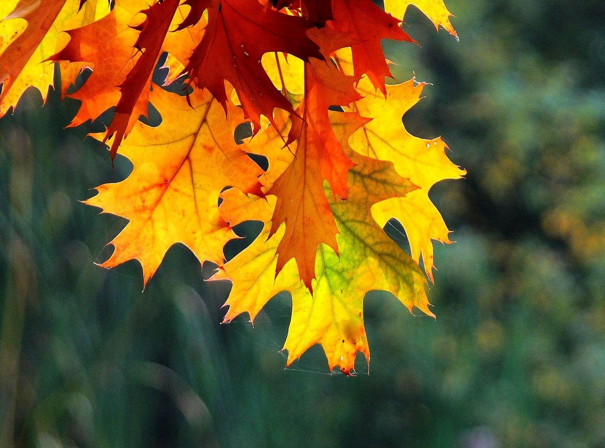 回顾秋天的颜色_图1-7