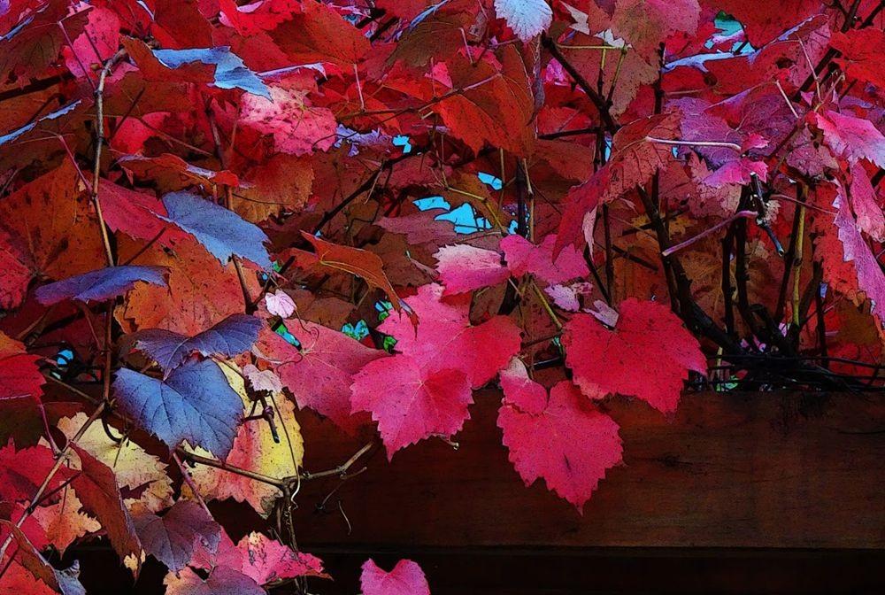回顾秋天的颜色_图1-8