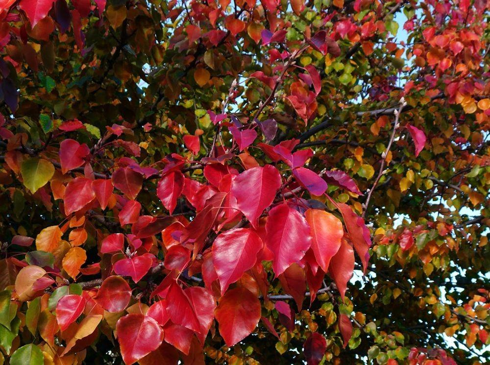 回顾秋天的颜色_图1-9