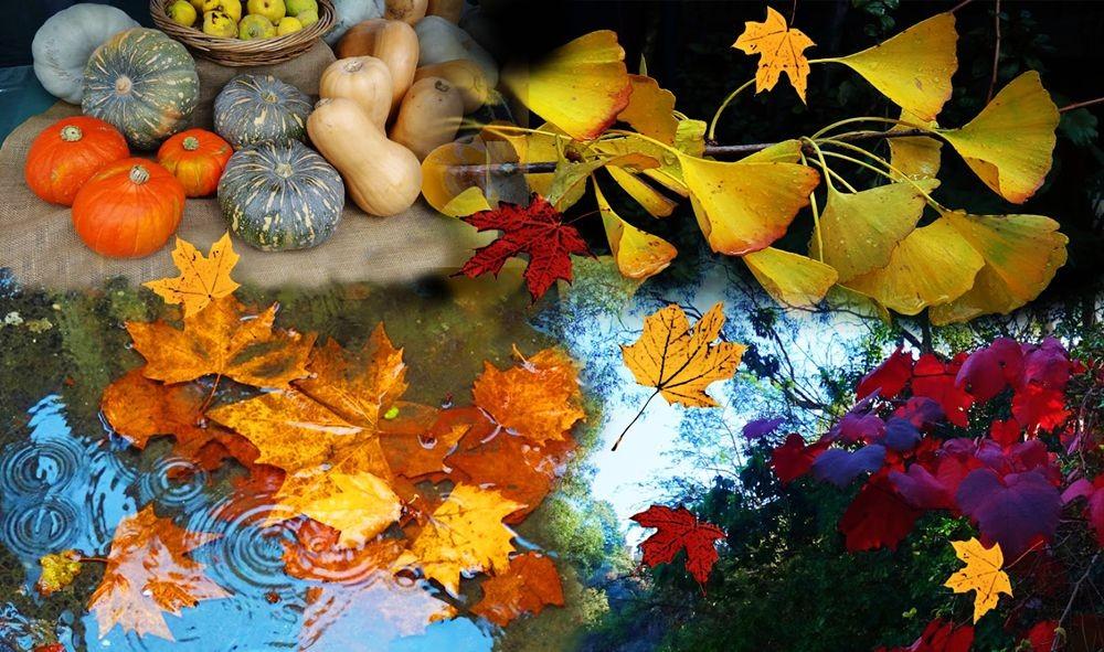 回顾秋天的颜色_图1-10