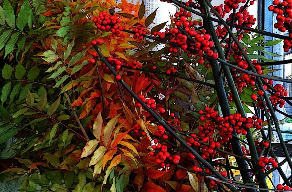 回顾秋天的颜色_图1-11