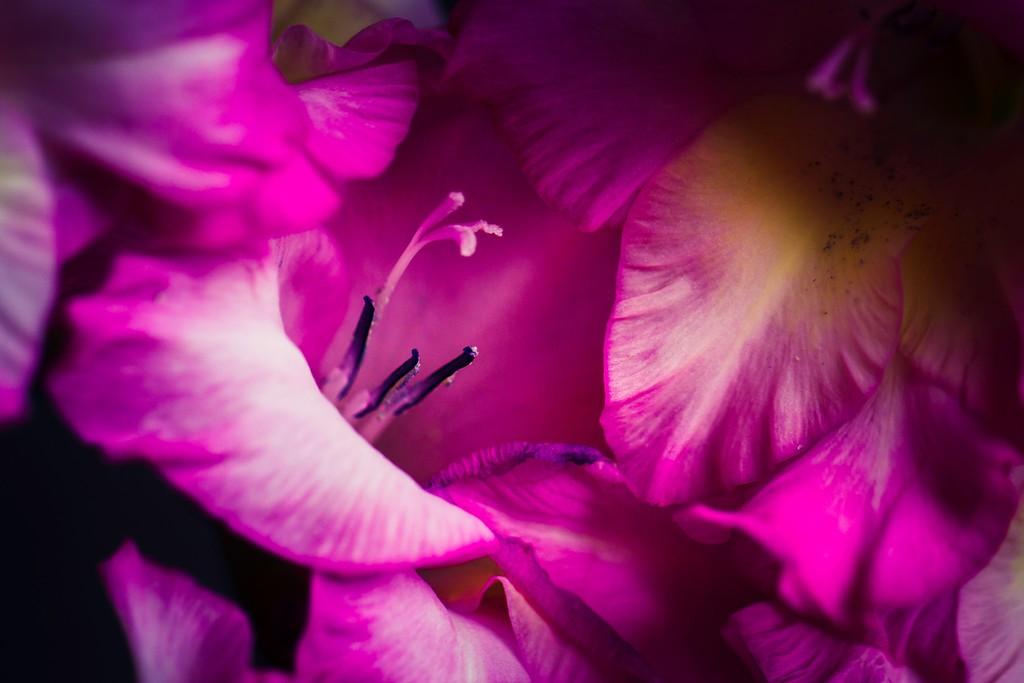 菖兰花,光大写照_图1-4