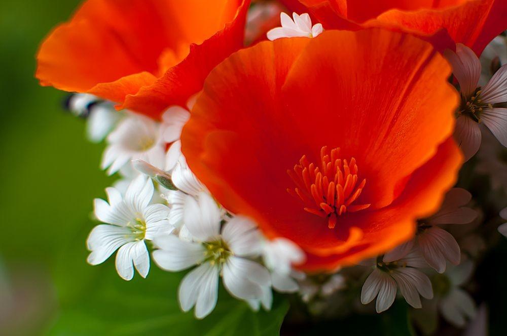 花卉日记-68_图1-1