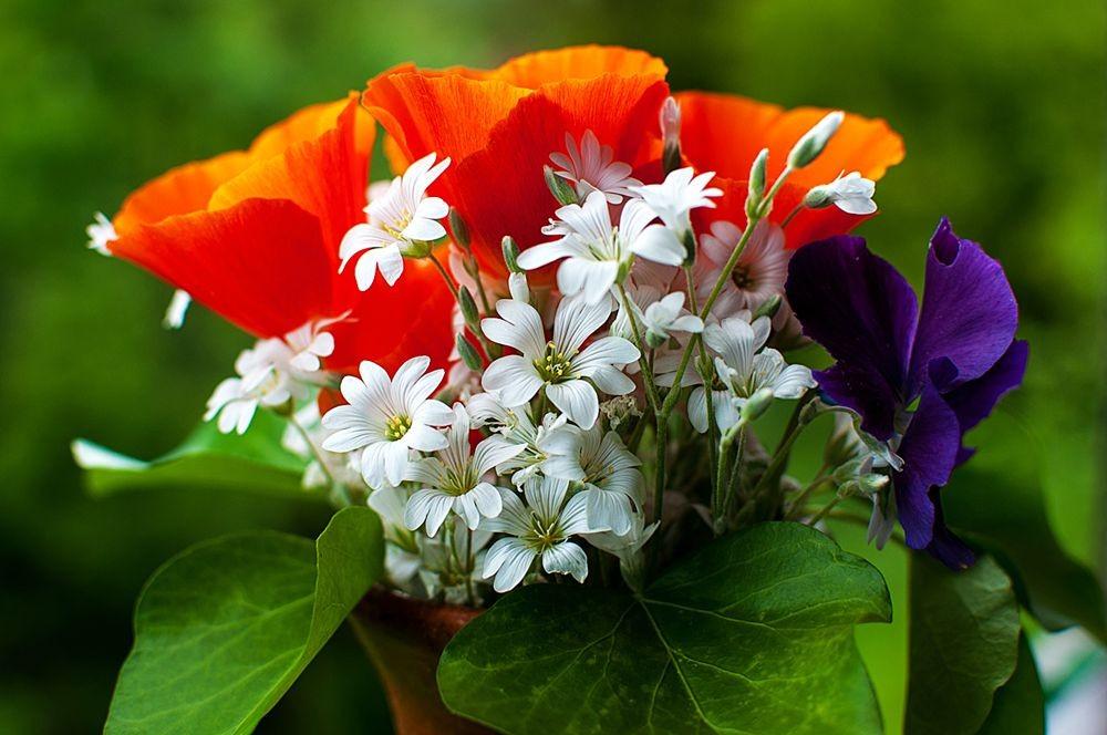 花卉日记-68_图1-2