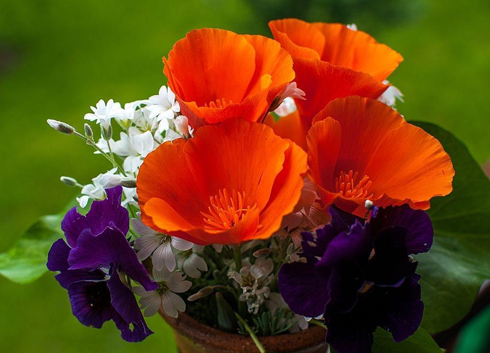 花卉日记-68_图1-3