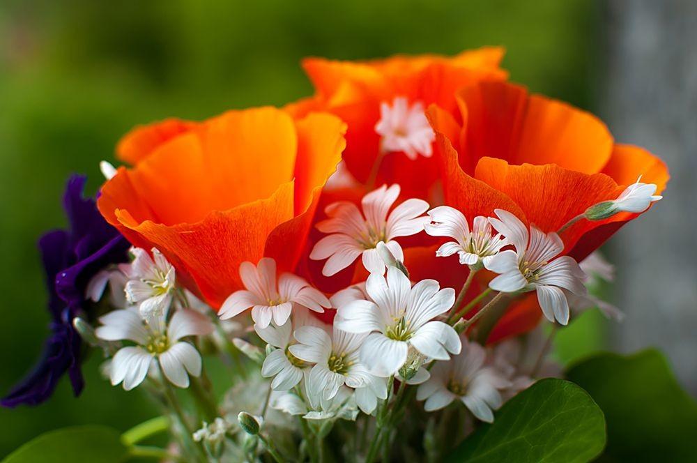 花卉日记-68_图1-4