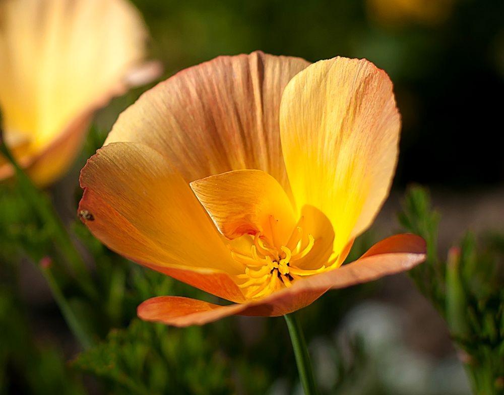 花卉日记-68_图1-5