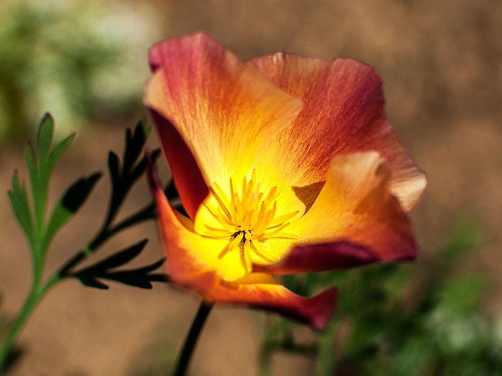 花卉日记-68_图1-6