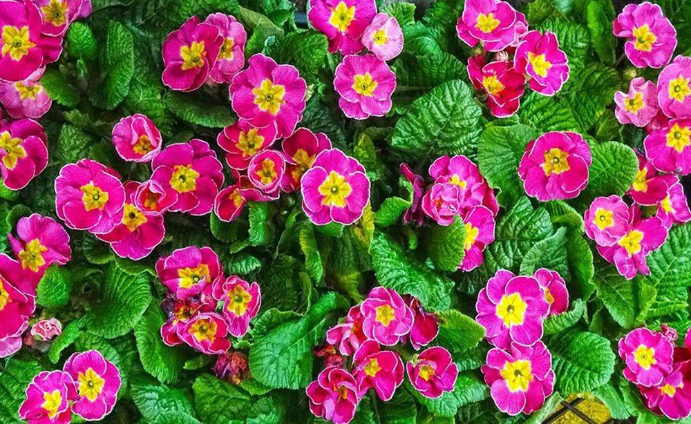花卉日记-68_图1-7