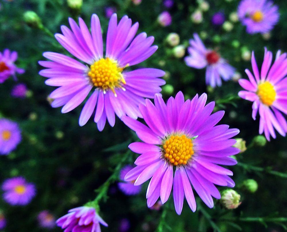 花卉日记-68_图1-8