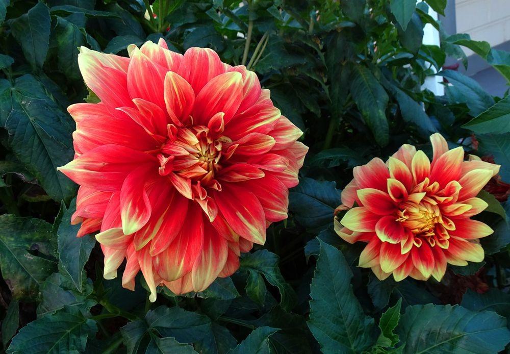 花卉日记-68_图1-10
