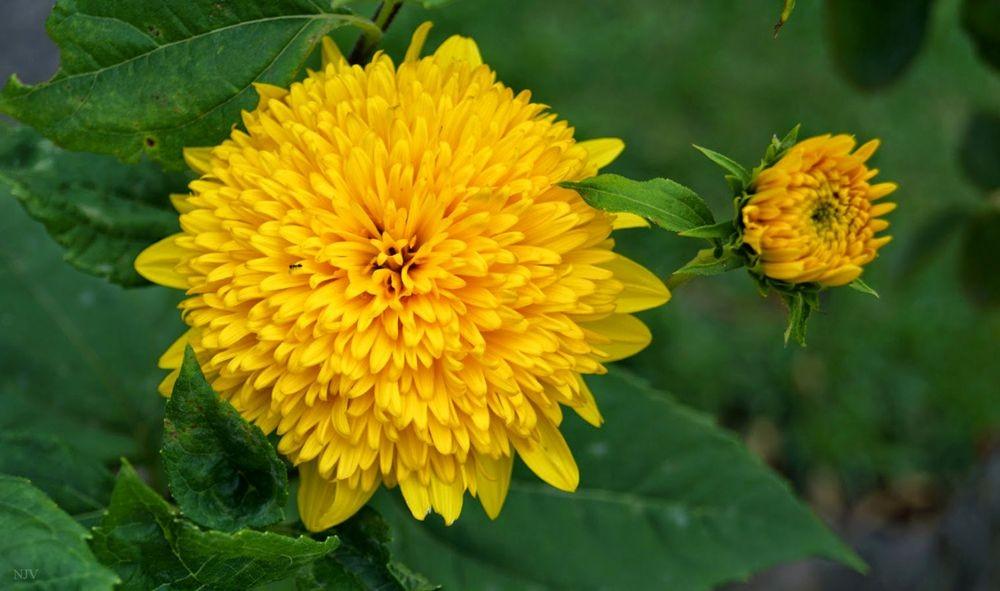 花卉日记-68_图1-16